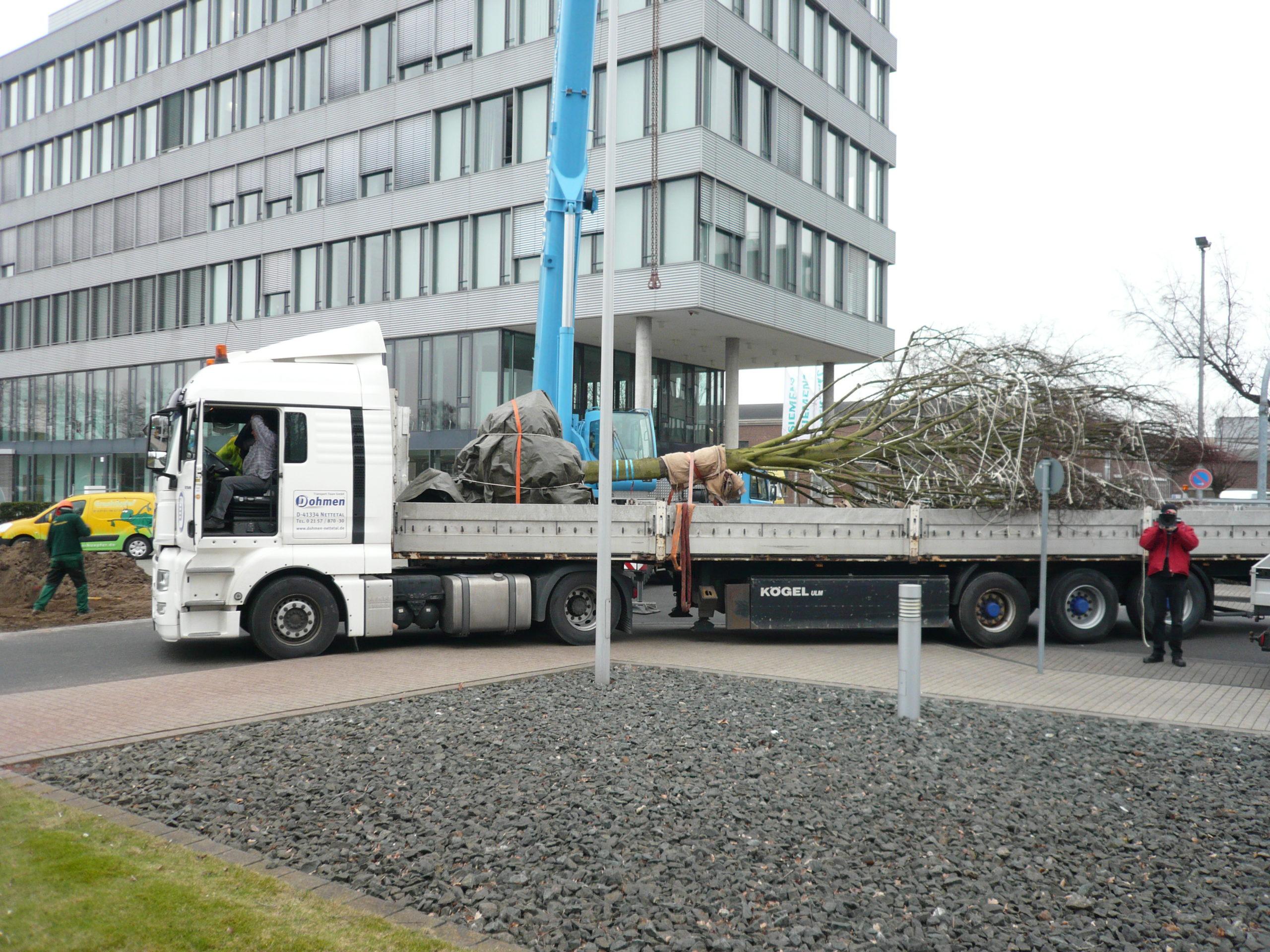 Projekt Grossbaumpflanzung bei Siemens in Krefeld (02)